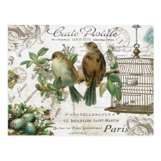Modern Vintage French birds and birdcage Postcard