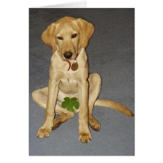 Modest puppy card
