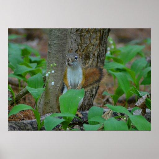 Modest Squirrel Poster
