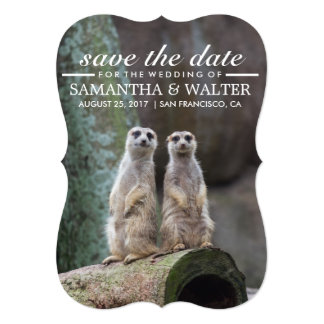 Modify This Funny Meerkats Save The Date Card