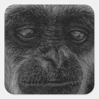 mokey square sticker