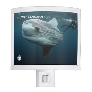 Mola Mola Night Lights