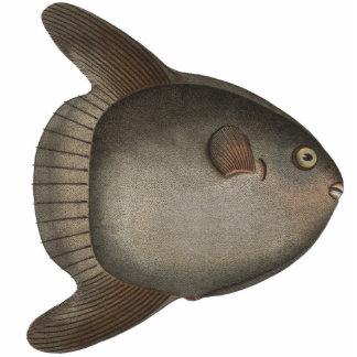 Mola Mola Ocean Sunfish Magnet for Your Fridge Photo Sculpture Magnet