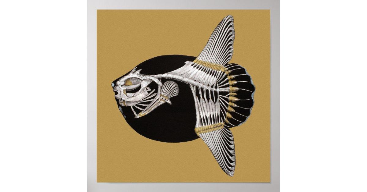 Mola Rotunda Sunfish Fish Skeleton Art Print | Zazzle.ca
