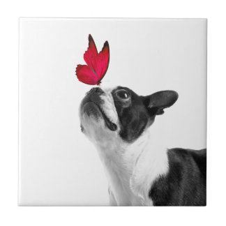Mollie mouse child Boston Terrier Tile