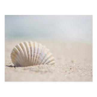 Mollusk Seashell Postcard