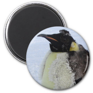 Molting Emperor Penguin 2 Inch Round Magnet