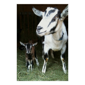 Mom Goat with Baby Ginger Poster