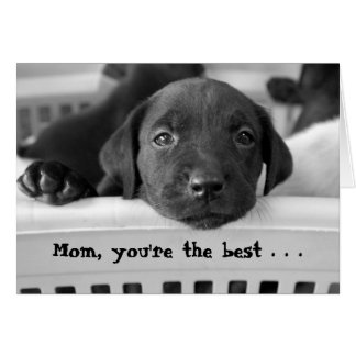 Mom, you're the best . . . card