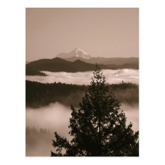 Moments in the fog.... postcard