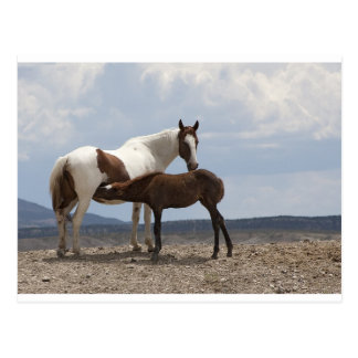 Momma and Baby Mustang Postcard