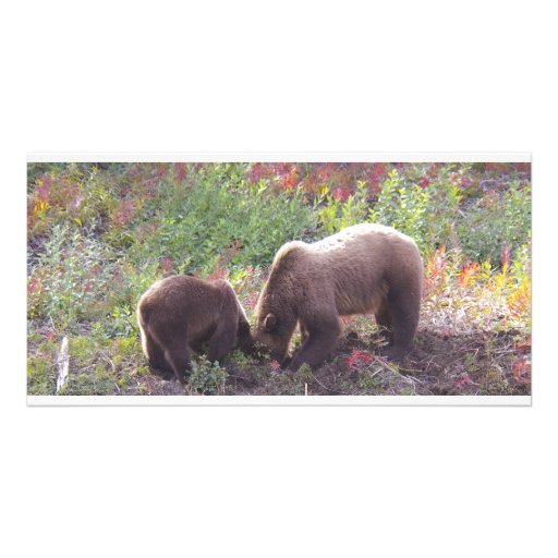 Momma Grizzly bear & Cub Photo Card Template