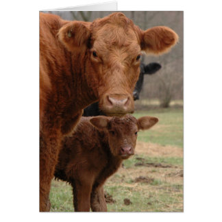 mommy cow and baby cow greeting card