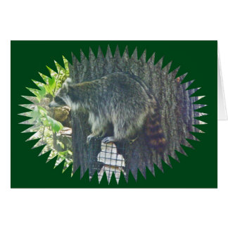 Mommy Raccoon Stealing Suet Card