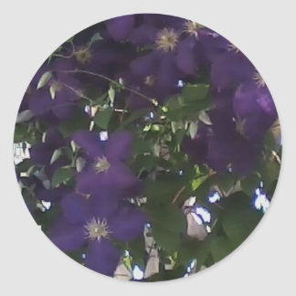 Mom's Clematis Flowering Vines Sticker