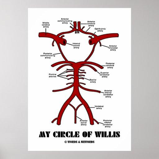 Mon cercle de willis (anatomique) poster