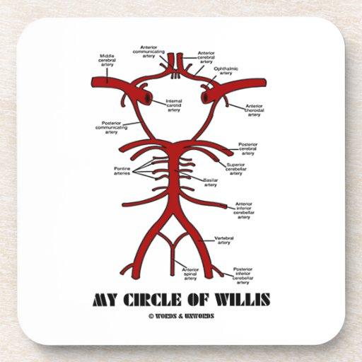 Mon cercle de willis (anatomique) sous-bocks