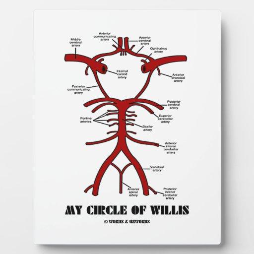 Mon cercle de willis (anatomique) photos sur plaques