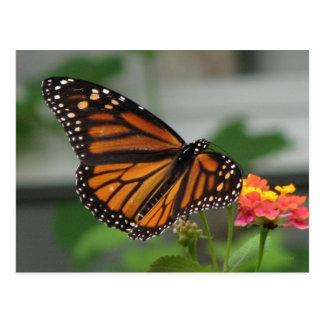 Monarch and Lantana Postcard