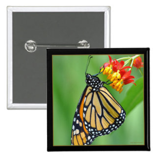 Monarch and Milkweed No3 Button - Square
