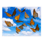 Monarch butterflies in the sky postcard