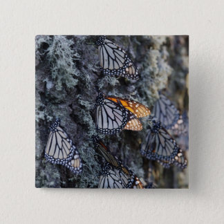 Monarch Butterflies on Pine Tree, Sierra Chincua 2 2 Inch Square Button