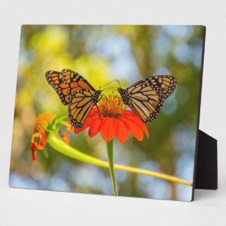 Monarch Butterflies on Wildflowers Plaque