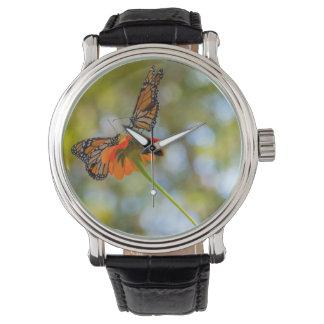 Monarch Butterflies on Wildflowers Watch