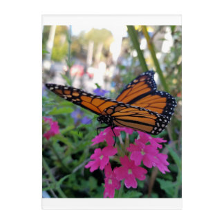 Monarch Butterfly Acrylic Wall Art