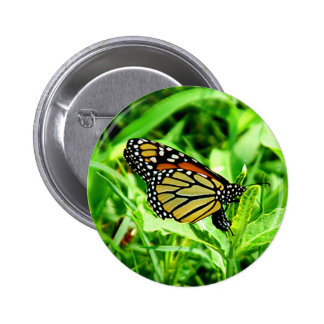 Monarch Butterfly Button