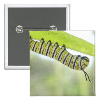 Monarch Butterfly Caterpillar Exploring A Milkweed 2 Inch Square Button