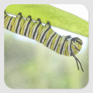 Monarch Butterfly Caterpillar Exploring A Milkweed Square Sticker