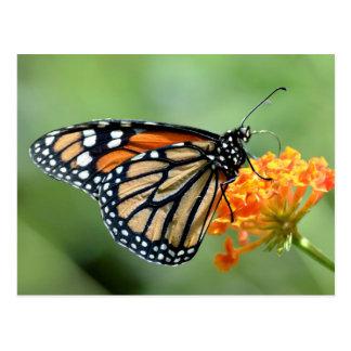 Monarch butterfly feeding on flower postcard