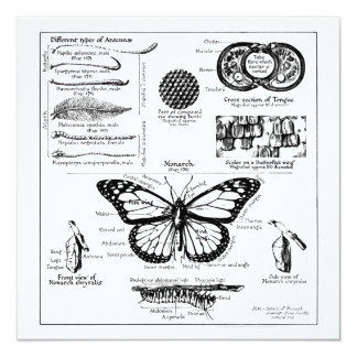 "Monarch Butterfly Information 5.25"" Square Invitation Card"