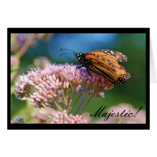 Monarch Butterfly, Majestic! Greeting Card