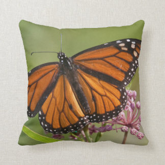 Monarch Butterfly male on Swamp Milkweed Throw Pillow