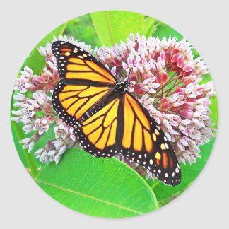 Monarch Butterfly Milkweed Flower  Sticker