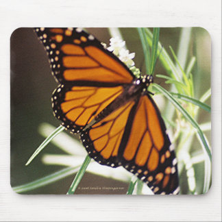Monarch Butterfly Mousepad
