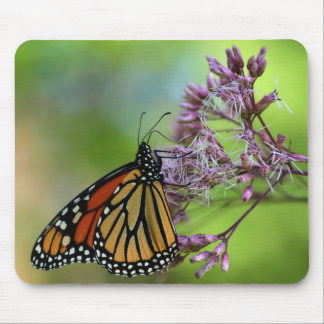 Monarch Butterfly Mousepad - Against Green