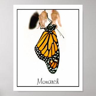 Monarch Butterfly Newborn Photograph Poster