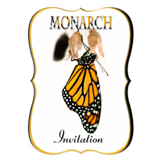 Monarch Butterfly Newborn with Cocoon - Photograph Card