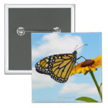 Monarch Butterfly on a Black Eyed Susan Pinback Button