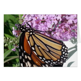 Monarch Butterfly on a Butterfly Bush Card