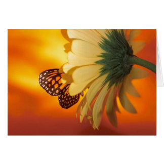 Monarch Butterfly on a Daisy Blank Card
