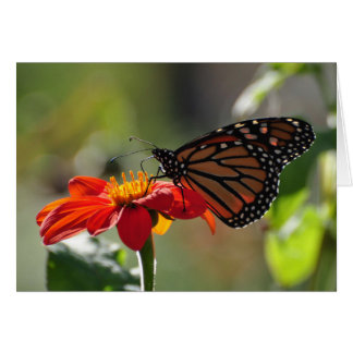 Monarch Butterfly on a Mexican Sunflower Torch Card