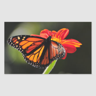 Monarch Butterfly on a Mexican Sunflower Torch Sticker