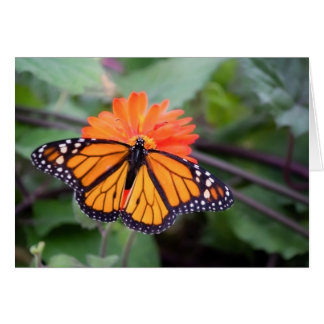 Monarch butterfly on an orange flower card