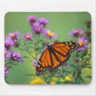 Monarch Butterfly on Asters Mouse Pad