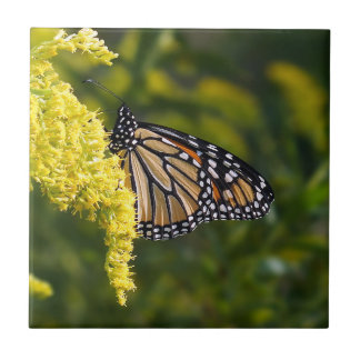 Monarch Butterfly on Goldenrod Ceramic Photo Tile