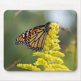 Monarch Butterfly on Goldenrod Mousepad